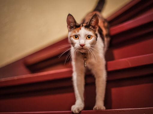 Cat on red stairs